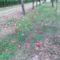 Alma a fa alatt, nyári piros alma...