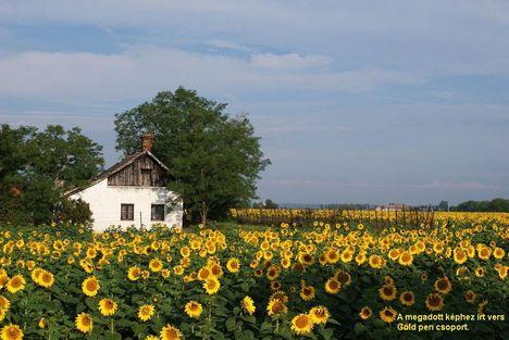 Élet a tanyák körül--Dáma Lovag Erdős Anna verse