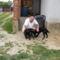 Sokszor meglátogatjuk őket, mert valahol a mi kutyáink is és ezt Ők is tudják és úgy is fogadnak!