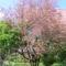Tavaszi hangulatok Undon 6