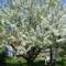 Tavaszi hangulatok Undon 7