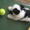 teniszlabda és én