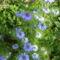 virág1