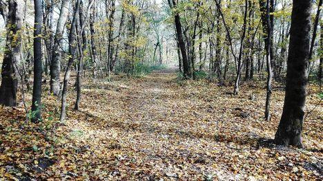 Itt van az ősz, itt van újra..., Aranyossziget, Mosonmagyaróvár 2017. november 05 .-én 2
