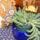 2009.06.08 Virágzó dögkaktusz