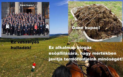 Magyar háttér