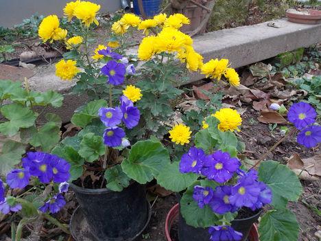 Novemberi virágok.