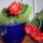Balogh Tamásné kaktuszai