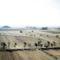 Mandzsúr piramisok korea
