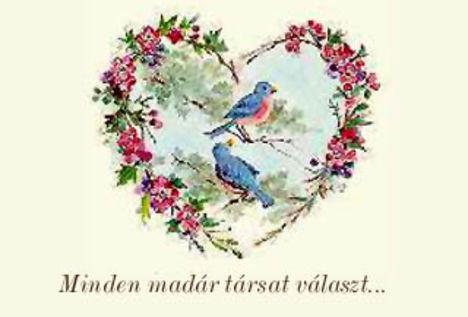 minden madár....