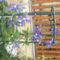 virágok 131