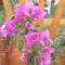virágok 136
