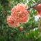 virágok 139