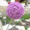 virágok 143