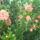 virágok 164