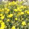 virágok 178