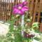 virágok 191