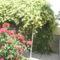 virágok 202