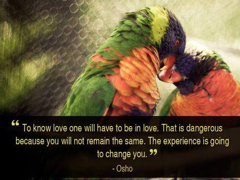 """""""Ahhoz, hogy ismerd a szerelmet, szerelmesnek kell lenned. Ez pedig veszélyes, mert..."""