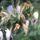 Sáriné Andi virágjai