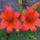 Judit virágai