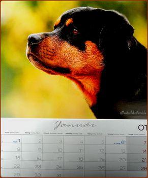 Rottweiler - Január 2018