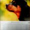 Rottweiler__januar_2018_2057637_7647_s