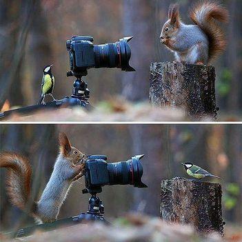 vicces képek