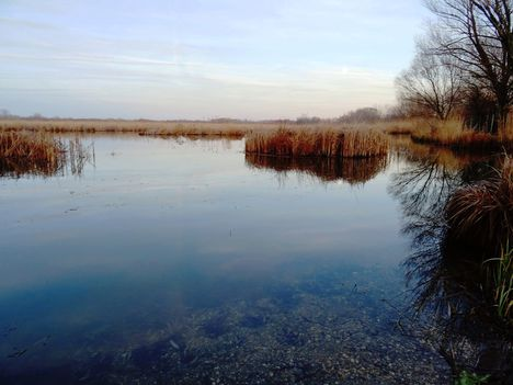 Holt-Duna, Lipót, 2017. december 31.-én 4