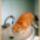 Sárvári Gyuláné - cicuskák