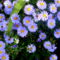 Aster-002_2005666_6724_s
