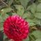 Dalia-004_2050535_5458_s