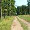 Erdő részlet
