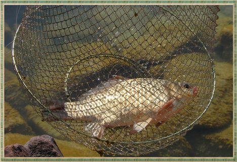 Horgászat. 12