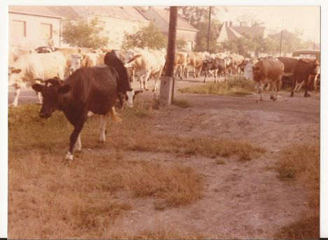 Gulya, 1986.
