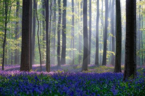 Tavasz az erdőben