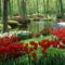 Virágok az erdőben