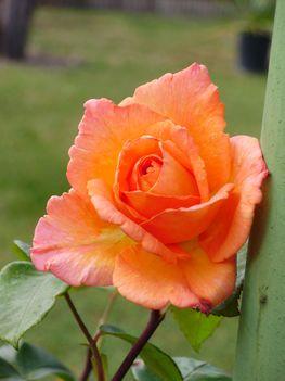 narancssárga futó 2009