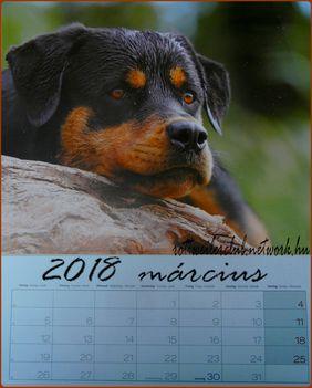 Rottweiler - Március