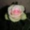 Rózsa csakúgy