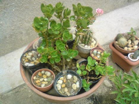Vegyes ültetés