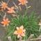 Ez a virágok a a kedvenceim-