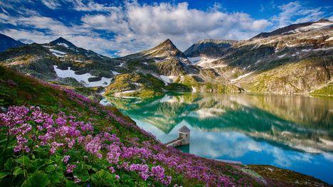 Havas hegyek virágok-051