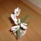 virágaim 016