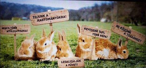 Ahogy a nyuszik látják a húsvétot