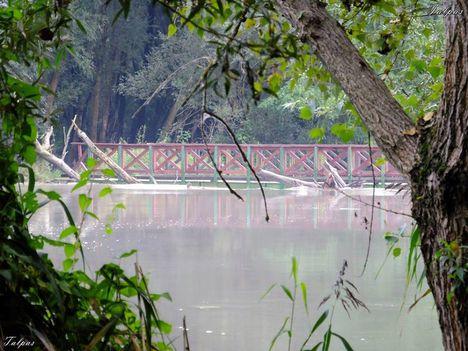 Szigetköz, a Duna ölelő csodája..Dáma Lovag Erdős Anna verse: