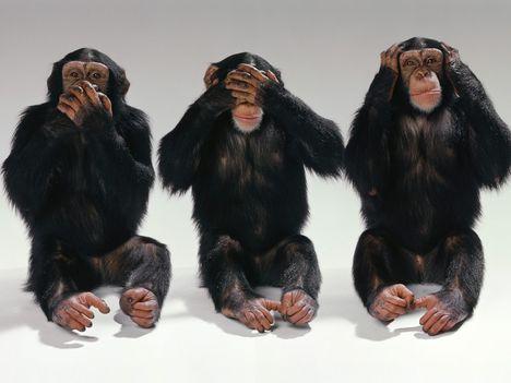 csimpánzék