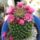 Kaktuszom_267215_31032_t