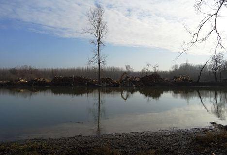 Fakitermelés a cikolaszigeti Felső-Forgó szigeten, Dunasziget 2018. január 22.-én