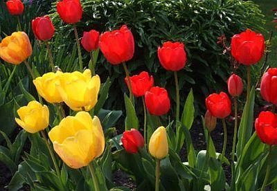 Pirosak és sárgák
